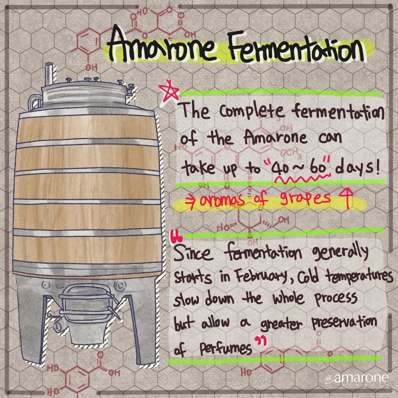 Amarone Fermentation