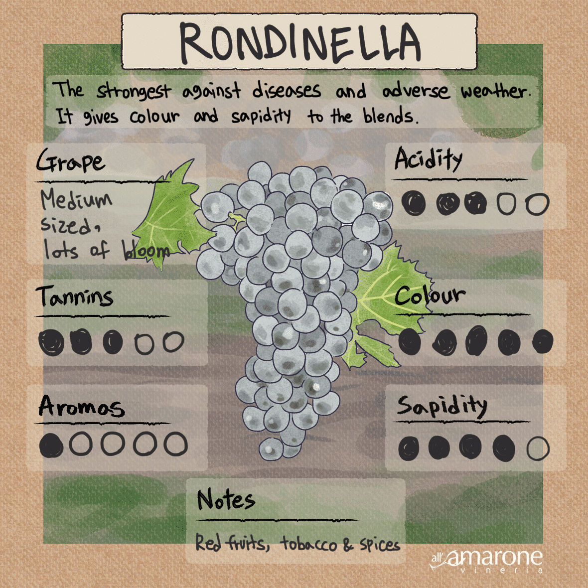 Rondinella Grape used in the Valpolicella & Amarone Blend