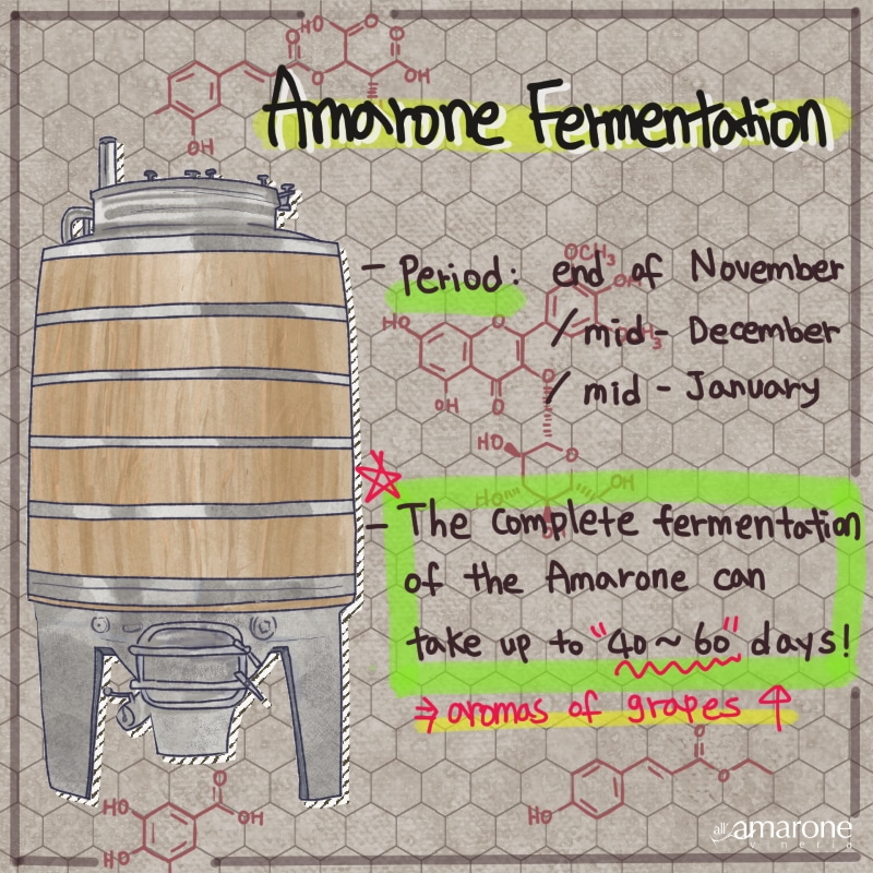 Fermentation of Amarone Wine